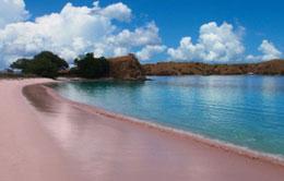 Pink Beach - Flores
