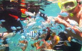 Gili Nanggu Snorkeling