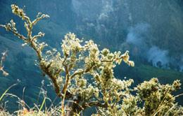 Landscape around the Top of Mt.Rinjani
