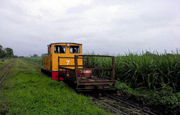 Cane Railway Transport