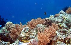 under water of Gili nanggu island