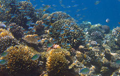 Snorkeling in Gili Air