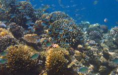Snorkeling in Gili Air