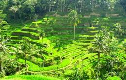 Ubud, Cultural Center of Bali